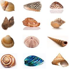 Choose one of the 12 shells, the one that is most appealing to you, and find out how special you are. Let's play: Choose a shell and find out what your. Sea Shells, Personality, Stud Earrings, Crafts, Fun Stuff, Magazine, Play, Woman, Natural
