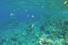 snorkelling-great-barier