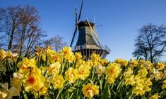 Dutch flower park's virtual tour brings its blooms to living rooms | World news | The Guardian
