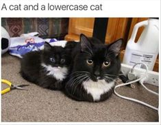 Funny Animal Pictures Of The Day � 24 Pics
