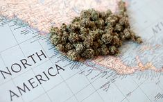 Make Cannabis Great Again: Congressmen Introduce Pro-Pot Bills on the Hill | The Marijuana Times