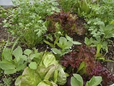 The Advantages of Polyculture vs Monoculture | Organic Farming Blog