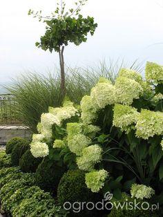 Ogród wśród pól i wiatrów - strona 174 - Forum ogrodnicze - Ogrodowisko