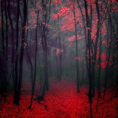 Rojo y Negro que hermosa combinación.
