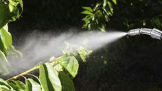 Before using vinegar on your weeds...In concentrations strong enough to be effective, vinegar is hazardous and can cause environmental damage.