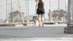 Pasear Al Perro, Collie De Frontera