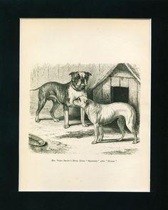 ANTIQUE Dog Print 1882 English Bulldog Dogs named SMASHER and SUGAR