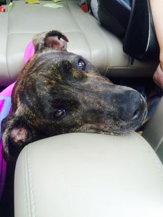 Cookie Alert Type: Lost Alert Number of Pets : Only one pet Pet Kind : Dog Gender : Female Breed : Brindle, mixed breed, 55lbs brown black Lost Date : Oct 10, 2015 Alert Date : Oct 12, 2015 Missing Address : Wilridge Rd and Ethan Allen Hwy Missing City : Ridgefield Missing State : Connecticut Missing Zipcode : 06877 Alert Status : Active