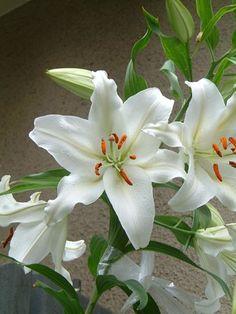 230 Ideas De Flores Blancas Flores Blancas Flores Imágenes Bellas
