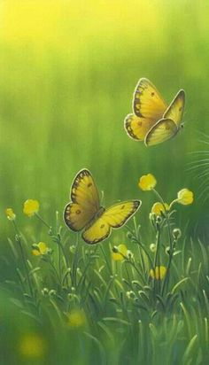 Yellow and Green in Nature with butterflies and flowers Butterfly Kisses, Butterfly Flowers, Beautiful Butterflies, Tier Fotos, Mellow Yellow, Color Yellow, Belle Photo, Shades Of Green, Beautiful Creatures