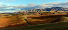 https://flic.kr/p/nm3o3T | Marlbrough Landscape. | Marlborough is one of the regions of New Zealand, located in the northeast of the South Island, named after the Duke of Marlborough, a famous English soldier and statesman. Marlborough is a unitary authority, both a region and a district, and its council is located at Blenheim. Marlborough is known for its dry climate, the picturesque Marlborough Sounds, and Sauvignon blanc wine.