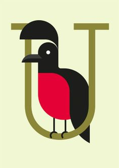 U is for Umbrellabird