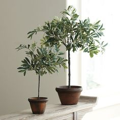 Ballard Designs Olive Topiary 18 Inches ($49) ❤ liked on Polyvore featuring home, home decor, floral decor, artificial tree trunk, tree trunk, leaf tree, olive tree topiary and faux olive tree