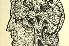 Illustrations from Vaught's Practical Character Reader, a book on phrenology by L. Vaught published in Leaf Outline, Ernst Haeckel, Human Body Parts, Demonology, Book Of Hours, Effigy, Free Graphics, Book Of Life, Public Domain