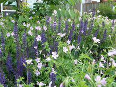 Tuinontwerp tuinaanleg Eindhoven Helmond groene tuin met pergola en ...
