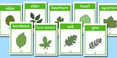 leaf descriptions