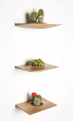 cantilevered shelves that hold plants for an artful living art wall installation! Very cool.
