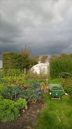 Farmers Kale and palm kale in the vegetable garden oktober 2016 Boerenkool en palmkool in de moestuin oktober 2016
