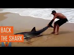 Viral videos,Back in.Thanks for watching ! Your favorites , of the best viral…