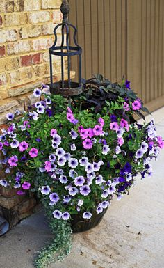 Ingredients: Petunia (variety of purple tones), Calibrachoa MiniFamous 'Double Amethyst', Sweet Potato Vine 'Little Blackie', Dichondra 'Silver Falls'.  Light Requirements: Full Sun