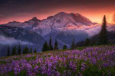 Violet Crown by Ryan Buchanan - Photo 135902939 / 500px