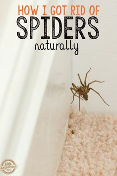 How To Keep Spiders Away From Your House You will need: drops peppermint essential oil water 2 oz spray bottle (quick tip: be sure to use a GLASS spray bottle because essential oils can eat up plastic! Keep Spiders Away, Get Rid Of Spiders, Keep Bugs Away, How To Repel Spiders, Natural Spider Repellant, Spider Killer, House Spider, Insect Repellent, Cleaning