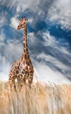 windy up here ….. by David Hobcote