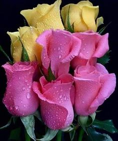 in my dreams Good Morning Beautiful Flowers, Beautiful Rose Flowers, Flowers For You, Elegant Flowers, Colorful Flowers, Rosa Rose, Colouring Pics, Watercolor Rose, Everything Pink