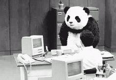 Google+ - Pandas Back