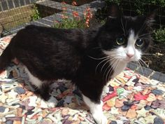 Our beautiful blind senior cat Hope