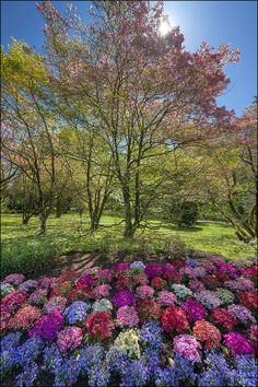 Giardini di Villa Taranto Verbania