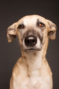 The faces of Scout, by Elke Vogelsang (photographer and Scout's person).