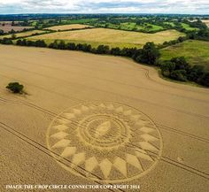 Crop Circle at Crop Circle at Nettle Hill, nr Ansty, Warwickshire, United Kingdom. Reported 16th August  2014