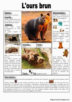 fiche+ours+brun.JPG - fiche+ours+brun.JPG fiche+ours+brun. Animal Projects, Projects For Kids, Web Animal, French Poems, Travel Size Bottles, French Language Learning, Adventure Quotes, Woodland Party, Learn French