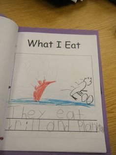 Ms. M.'s KG Class: Kindergarten Informational Non-Fiction Report Writing