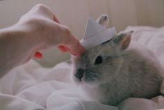 Prince Bunny!