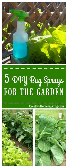 Five environmentally friendly bug sprays you can make yourself to treat pests in your garden.