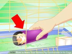 Image titled Make Your Guinea Pig Comfortable in Its Cage Step 14