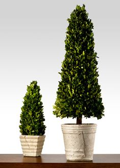 "$25 fr 4"" - $60 for 9"" - $100 for 43"" - Boxwood Cone Topiaries"