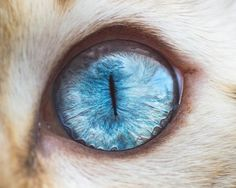 Andrew Marttila kedilerin gozleri fotograf 2