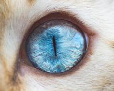 Plongez dans les yeux des chats avec les jolies photographies d'Andrew Marttila, aka Crazy Cat Man, un photographe américain........DOCUMENT.......