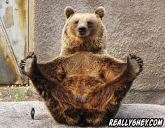 Fido does yoga, too! Here are 11 adorable animals doing yoga. Get your Downward Dog, Tiger Pose, and Yogi Bear on! Check it out here. Animal Yoga, Amor Animal, Mundo Animal, Animals And Pets, Funny Animals, Cute Animals, Beautiful Creatures, Animals Beautiful, Photo Ours