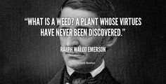 What is a weed? A plant whose virtues have never been discovered. - Ralph Waldo Emerson at Lifehack Quotes