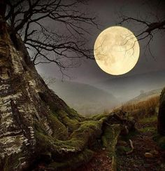 Forest Moon, Wales via Amazing Photos in the World Moon Moon, Moon Art, Blue Moon, Moon Shadow, Sombra Lunar, Moon Dance, Shoot The Moon, Moon Pictures, Moon Pics