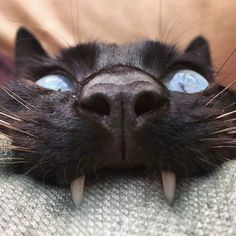 crescentmoon animalia Funny Cat Images, Funny Cats, Funny Pictures, Cat Jump Fail, Black Cat Day, Hello Kitty, Magnificent Beasts, Happy Images, Dog Memes