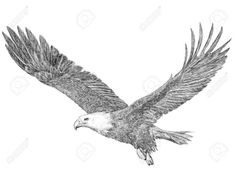 Bald eagle flying hand draw sketch black line on white background illustration. Fly Drawing, Eagle Drawing, Drawing Heads, Drawing Sketches, Feather Clip Art, Feather Drawing, Sketch Head, Bird Sketch, Crafts With Pictures