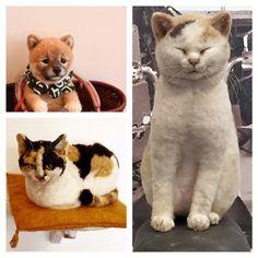 ■ 長毛猫さんのたてがみ の画像 Hinali's blog!                                                                                                                                                                                 More