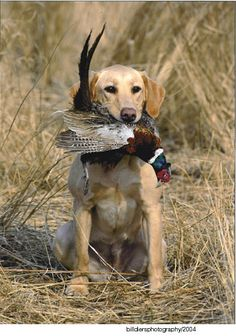 I miss that old yeller dog! I miss you Cody! You were a good hunting dog…