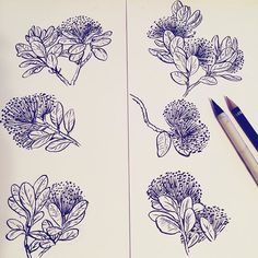 While in New Zealand my family and I kept seeing trees covered in clumps of fluffy red flowers. They turned out to be Pohutukawa trees - endemic to NZ. Colored version coming next!  #thecuriousartist #book #publishing #pohutukawa #newzealand #tree #evergreen #flower #botany #ecology #nature #science #endemic #species #conservation #environment #sketch #sketchbook #drawing #artist #illustrator #illustration #wip #inprogress #pen #brushpen