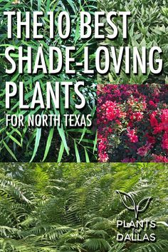10 Best Shade-Loving Plants for North Texas -  suggested list of 10 landscape plants that thrive in shade gardens.